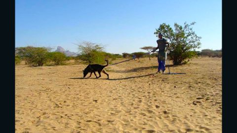 A dog being used in the operation to clear Girgir of landmines