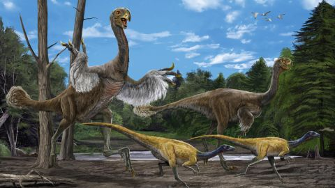 """In 2005, paleotologist Xu Xing and a group Chinese paleontologists <a href=""""http://www.nature.com/news/2007/070611/full/news070611-9.html"""" target=""""_blank"""" target=""""_blank"""">excavated the bones of this giant bird-like dinosaur</a>. It's believed to be 8 meters long and weigh 1.4 tons. Its arms were long and legs were bird-like."""