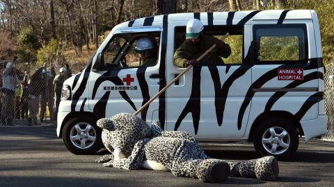 <strong>February 10:</strong> An employee from the Tama Zoo in Tokyo pretends to check a tranquilizer's effectiveness on an employee wearing a snow leopard suit. The annual drill practiced what to do in the event of an animal escape.