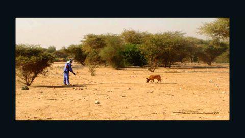 A dog on a land mine clearance operation in Girgir, eastern Sudan.