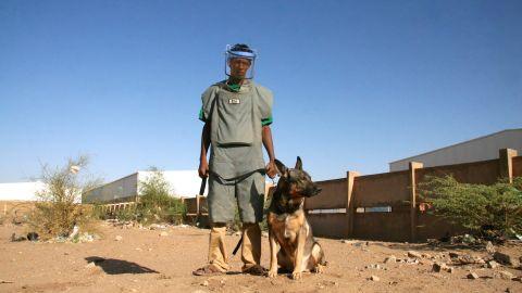 Handler Omar Salih with Marco, a Rottweiler and German Shepard cross.