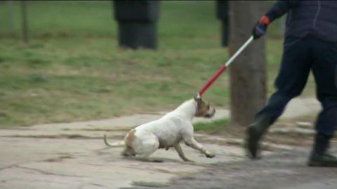 michigan boy mauled to death pitbulls_00000420.jpg