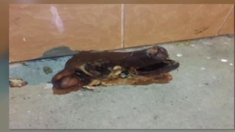 pig head thrown at philadelphia mosque sanchez tell nr_00002917.jpg