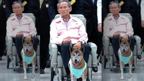 """(FILES) In this file photo taken late on February, 27, 2010, Thai King Bhumibol Adulyadej holds the leash of his dog while sitting in a wheelchair at a hospital in Bangkok. A Thai faces prison after being charged with lese majeste for insulting the king's dog, his lawyer said on December 15, 2015, in an escalation of the already draconian royal defamation law. Thanakorn Siripaiboon, 27, has been charged by police with lese majeste for a """"satirical"""" Facebook post about the king and his dog, lawyer Pawinee Chumsri told AFP.  AFP PHOTO / FILESAFP/AFP/Getty Images"""