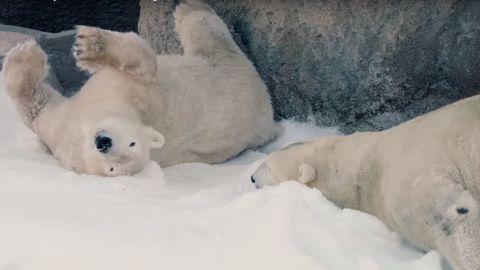 san diego polar bears snow day vstan orig bb_00003018.jpg