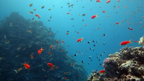 Coral reefs in the Sinai peninsula have become an international diving hotspot.