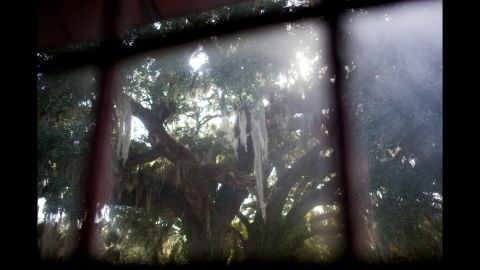 Spanish moss hangs from an old tree outside of Frampton's childhood bedroom.