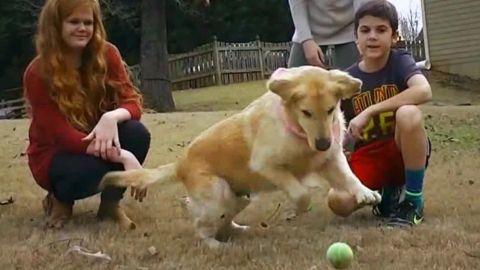 turkey dogs golden retriever sidner dnt_00013205.jpg