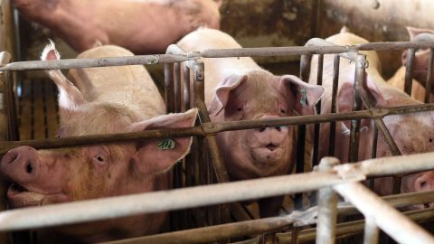 """WHO recommends a naming convention that would shun animal-specific names, such """"swine flu."""""""
