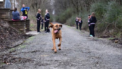 Ludivine ran the entire 13.1 miles without a leash or human companion.