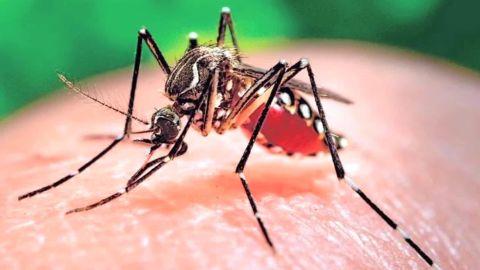 zika mutant male mosquitos mclaughlin pkg _00020830.jpg
