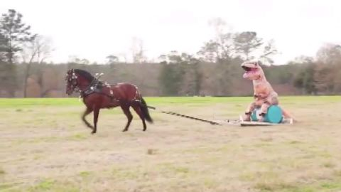 man in dinosaur costume rides horse dnt_00000907.jpg