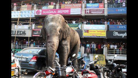 People watch the elephant as he walks along a busy street.