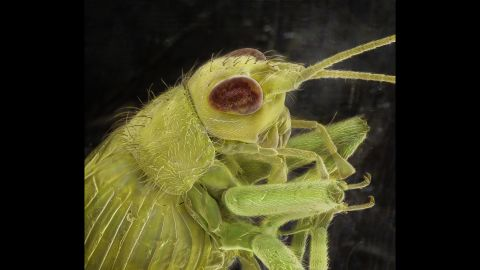 A bush cricket