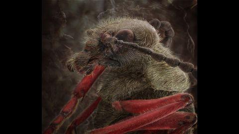 A blister beetle