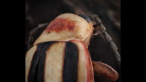 A leaf beetle