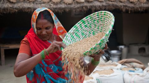 """A farmer winnows rice in the Maharajganj district of India. In poor areas of the world, """"many women's lives consist of six or seven or more hours of unpaid work every day,"""" say Bill and Melinda Gates."""