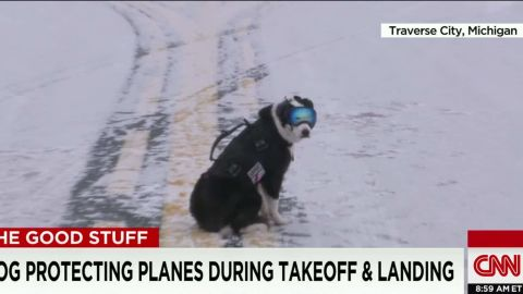 dog protects planes good stuff newday_00001416.jpg