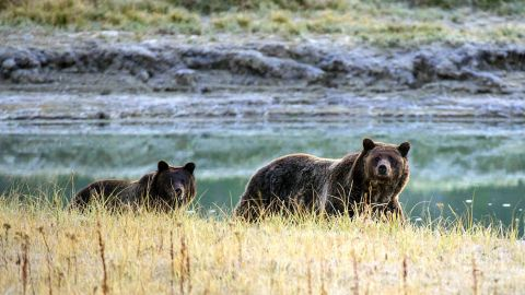 Officials recommend hikers take precautions such as carrying bear spray and traveling in groups.