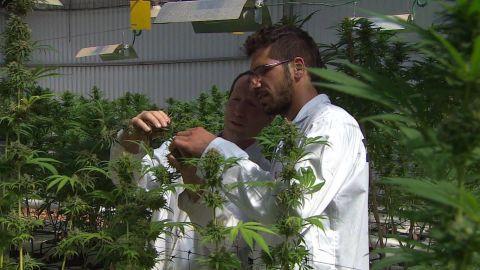 kosher cannabis israel pkg liebermann_00002730.jpg