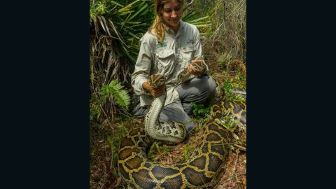 Conservationists in Florida sometimes use radio telemetry to track Burmese pythons.