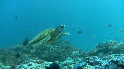 Climate Change Ocean Effects_00010220.jpg