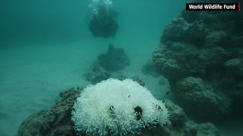 """""""At some reefs, the final death toll is likely to exceed 90%,"""" Andrew Baird, of the ARC Center of Excellence for Coral Reef Studies, says."""