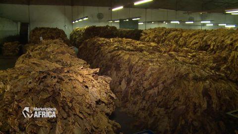 marketplace africa zimbabwe tobacco industry spc a_00011307.jpg