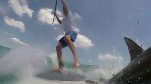 man knocked off paddle board by shark pkg_00001118.jpg