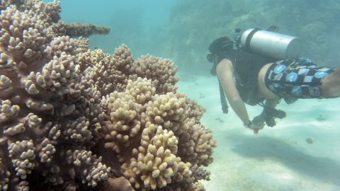 """Of the reefs surveyed in the northern third of the Reef, 81% are characterized as """"severely bleached."""""""