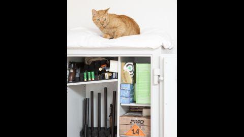 Ohmen's cat sleeps on top of his weapon closet.