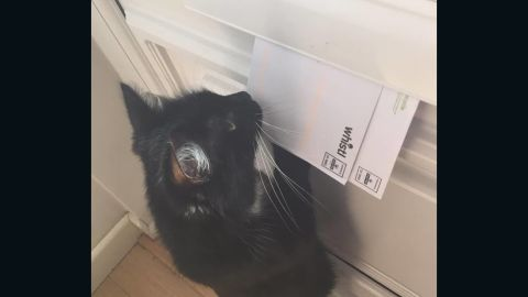 Bella attacks letters as they slide through the mail slot in her door.