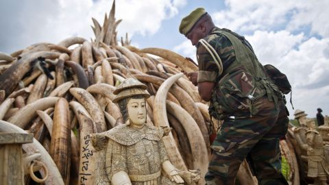 A ranger from the Kenya Wildlife Service (KWS) adjusts the positioning of tusks. The pyre is one of around a dozen that was burned in Nairobi National Park, Kenya on Saturday, April 30, 2016 in a dramatic statement against illegal poaching.