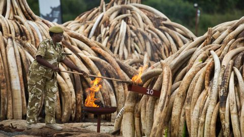 The mass burning involved 105 tons of elephant ivory and more than 1 ton of rhino horn, believed to be the largest stockpile ever destroyed.