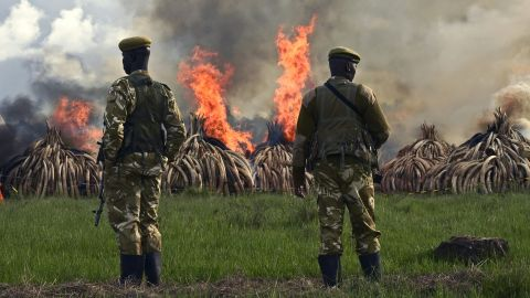 """Kenyan President Uhuru Kenyatta called for an end to """"murderous"""" trafficking and to fight against the extinction of elephants in the wild."""