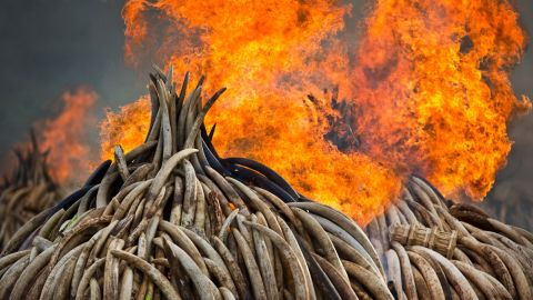 Every 15 minutes, an elephant is killed for its tusks. And some 1,338 rhinos were poached in Africa last year, a record number and the sixth year in a row that the number of poaching incidents has increased.