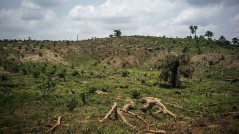 A picture taken on April 28, 2016 shows the intense deforestation for land clearing in order to produce palm oil in Lofa county in northern Liberia.