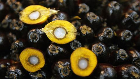 """Halved oil palm kernels from Malaysia, the world's largest producer. Palm oil fuels a $50 billion global industry, <a href=""""https://globenewswire.com/news-release/2015/07/27/755234/10143225/en/Palm-Oil-Market-Is-Anticipated-To-Grow-To-88-Billion-By-2022-New-Report-By-Grand-View-Research-Inc.html"""" target=""""_blank"""" target=""""_blank"""">projected</a> to rise to $88 billion by 2022."""