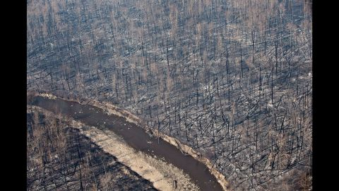Burned trees dot the landscape in Fort McMurray on May 13.