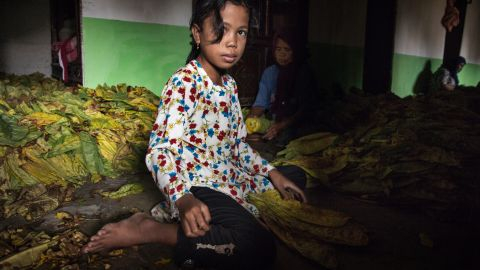 """Thousands of children work in Indonesia's tobacco farms, <a href=""""https://www.hrw.org/news/2016/05/25/indonesia-child-tobacco-workers-suffer-firms-profit"""" target=""""_blank"""" target=""""_blank"""">Human Rights Watch says. </a>"""
