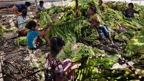The Indonesian government and international tobacco companies have been called to do more to stamp out child labor in the industry.