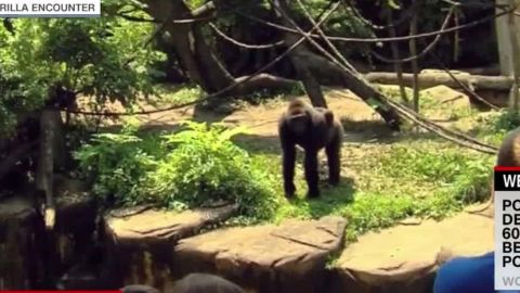 boy falls enclosure gorilla killed witness nr_00000322.jpg