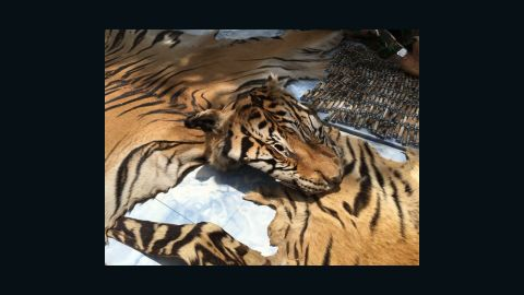 National Parks and Wildlife officers display the skins from two tigers that were seized from a truck leaving the temple, June 2.