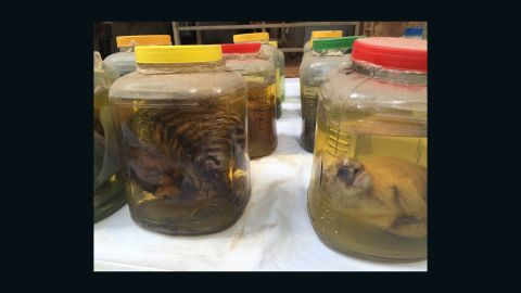 Jars containing baby tiger parts found at Wat Pha Luang Ta Bua Temple on June 2.