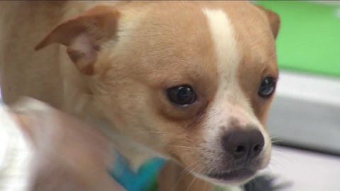 276 dogs rescued news 12 new jersey dnt_00002606.jpg
