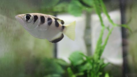 Oh hi, this archerfish is probably saying after seeing you