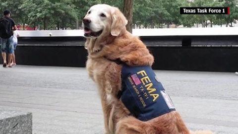 bretagne 911 rescue dog orig mg_00000020.jpg