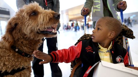 """A young boy pets a therapy dog named Toby inside Terminal 2 at San Francisco International Airport on December 3, 2013 in San Francisco, California.  The San Francisco SPCA and San Francisco International Airport joined forces to launch a new program called """"Wag Brigade"""" that will have a team of certified therapy dogs that will patrol the airport's to help calm stressed travelers during the busy holiday travel season."""