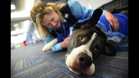 United Airlines employee, Lisa Alexander pets Rugi, a dog that was part of United Paws, an United Airlines program that allows passengers to interact with comfort dogs at Washington Dulles International Airport on Monday December 21, 2015 in Dulles, VA.