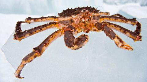 A number of tour operators offer king crab safaris to Kirkenes, on the border with Russia, between December and April.